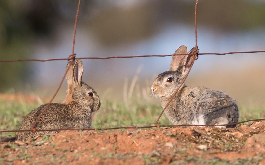 K5 Rabbit Control Program