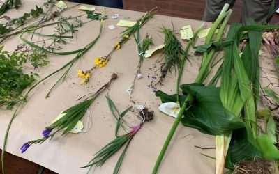 Workshop highlights the need for Weed ID