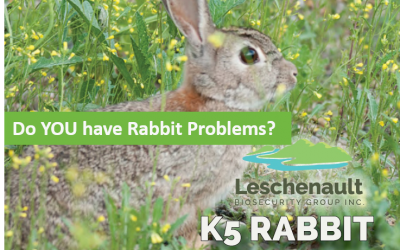 K5 Release Rabbit Control Program Commencing January 2021