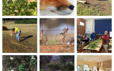 DPIRD Invites Submissions on the Proposed Declared Pest Rates for Financial Year 2021-2022