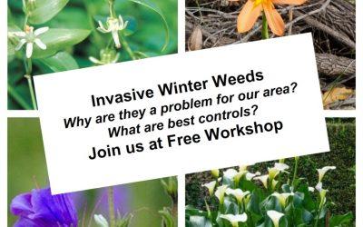 Winter Weeds Awareness Workshops