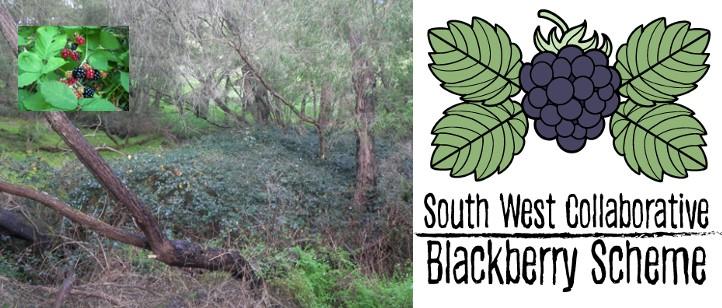 August Workshops _ South West Collaborative Blackberry Scheme