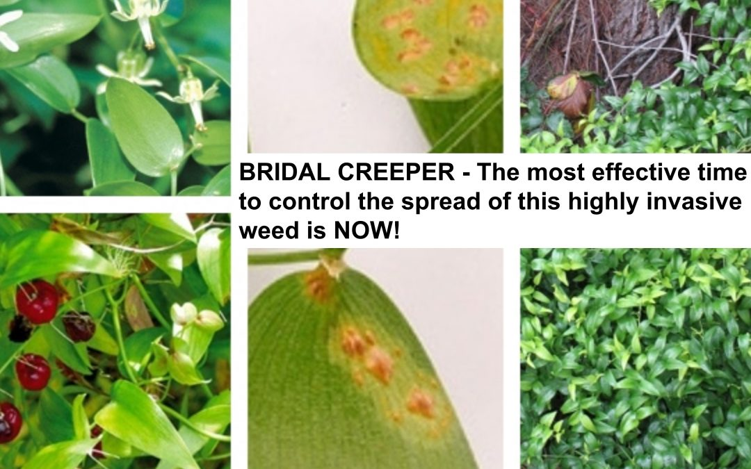 """Pop-up"" Bridal Creeper Workshops @ Local Markets 21st & 22nd August – Donnybrook & Boyanup"